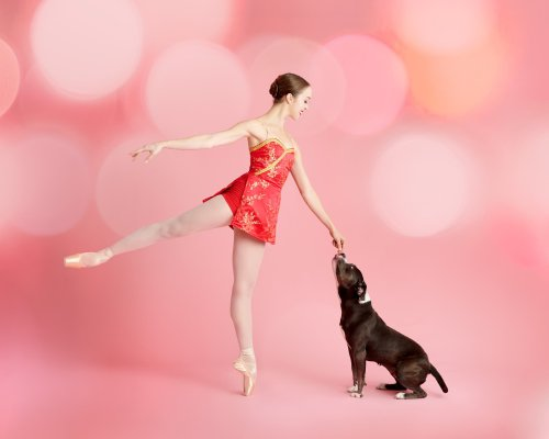 """Muttcracker"" Portraits Star Adorable Shelter Pets Alongside Ballerinas"