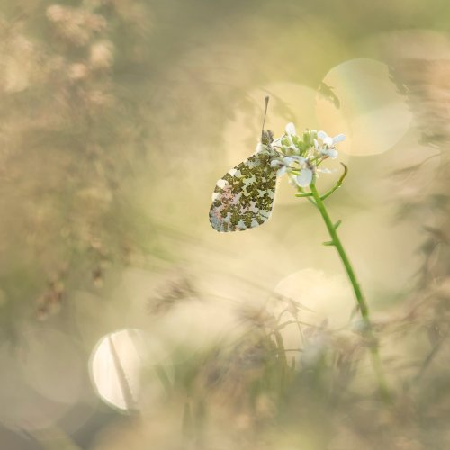 Neil Burnell Directs Our Gaze to the Delicate Beauty of Butterflies