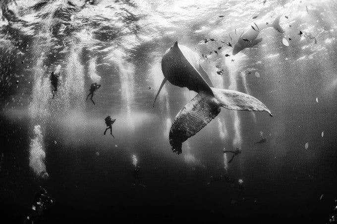 Anuar Patjane Brilliantly Photographs Life Underwater