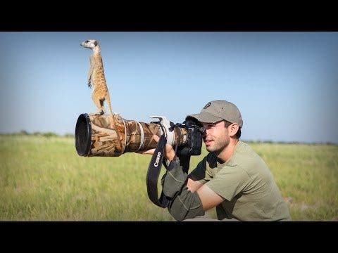 Wildlife Photographer Gets Turned into a Lookout Post by Wild Meerkats - The Phoblographer