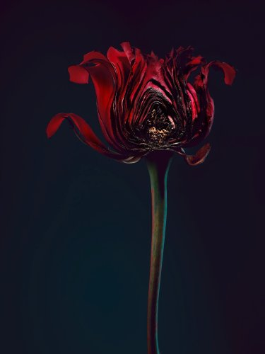 """Simon Puschmann Uses Powerful Flower Analogy Inspired by """"Me Too"""" Campaign"""