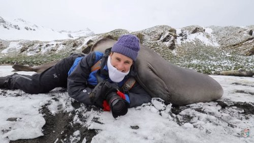 Wildlife Photographer Gets Squished by Curious Baby Elephant Seals