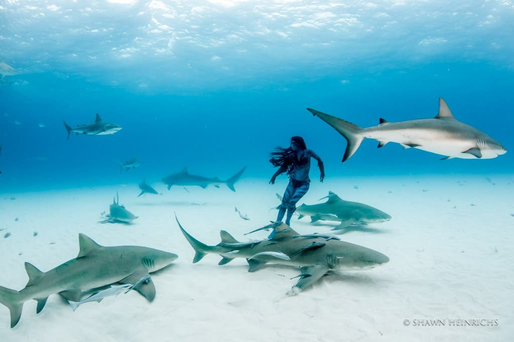 Sharks! Photographing These Very Misunderstood Creatures - cover
