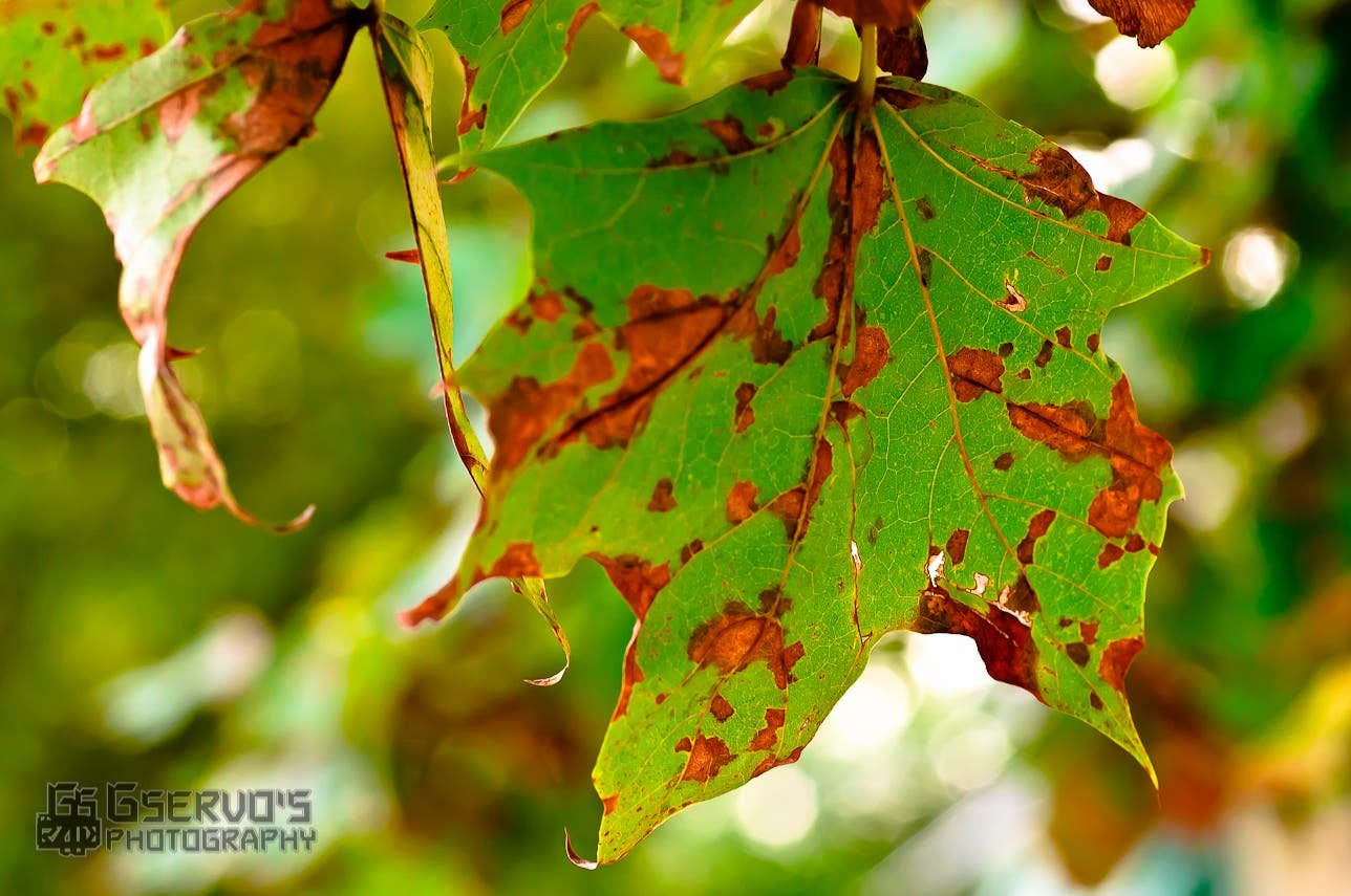 7 Tips To Get Started On Your Fall Photography - The Phoblographer