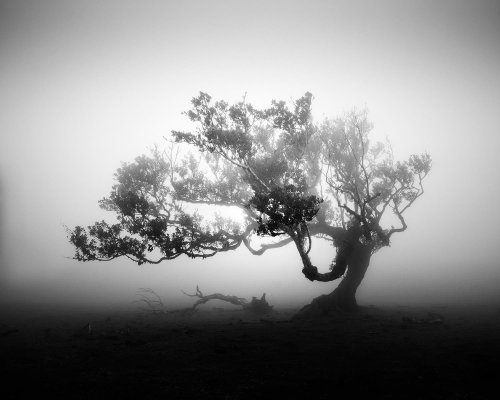 Michael Schlegel Reveals the Otherworldy Stillness of the Fanal Forest