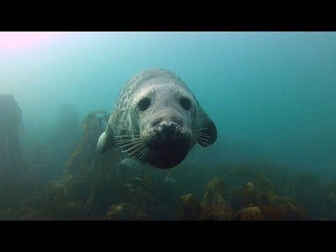 There's Plenty of Blubber Love in this New GoPro Video as Diver Gives Seals Belly Rubs - The Phoblographer