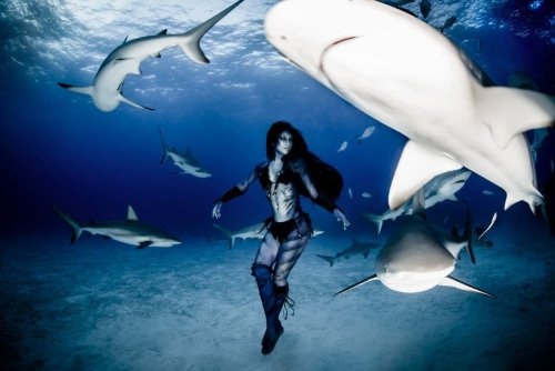 Woman Dances with Tiger Sharks in Conservancy Photo Project - The Phoblographer