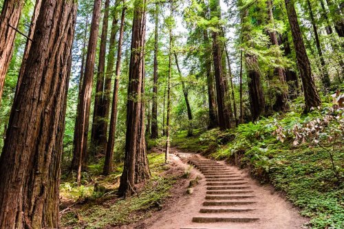 15 of the Best Hikes in California You Must Do!