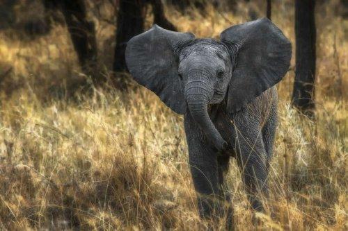 Best Tips for Going on Safari in Africa