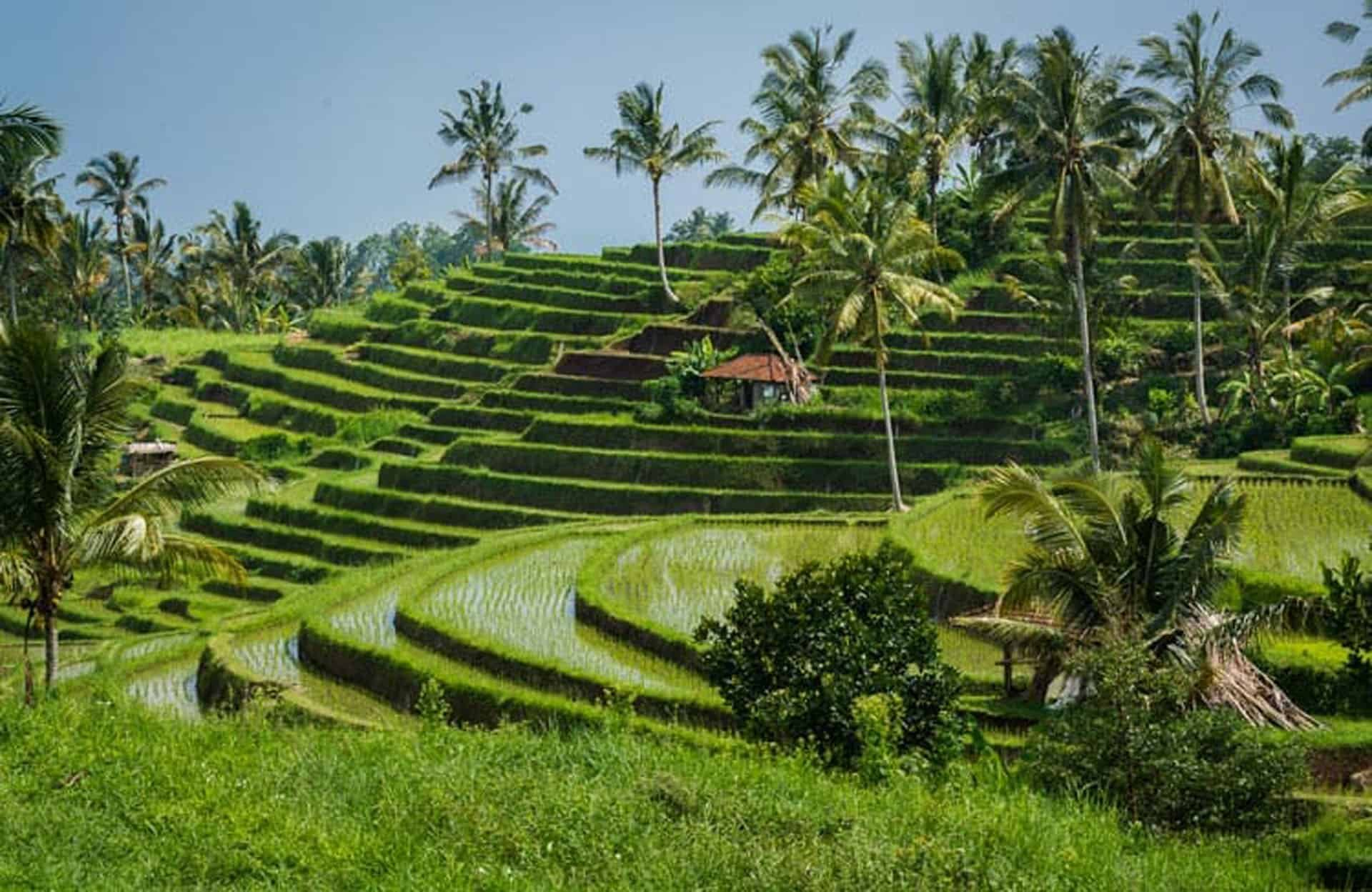 The Best Things to do in Bali - A local's guide and Insider Tips