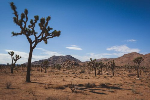 11 Best Hikes in Joshua Tree National Park