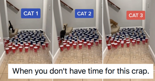 Cat 3 is the most relatable thing we'll see this week