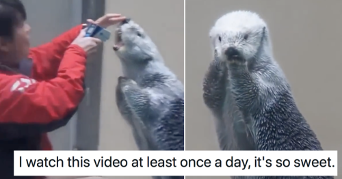People love the look on this sea otter's face after checking his temperature