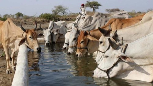 We have toilet-trained cows. It could help combat climate change