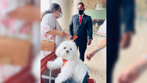 Travel Like a Boss: How a Woman Booked an Entire Business Cabin Just for Her Dog