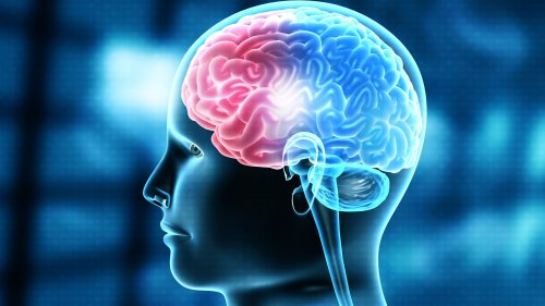 IIT and MIT Scientists Grow Human Brain Tissue Using 3D Printing