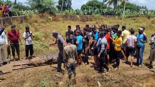 Maharashtra Floods: Visuals of Crocodiles Emerge from Inundated Villages