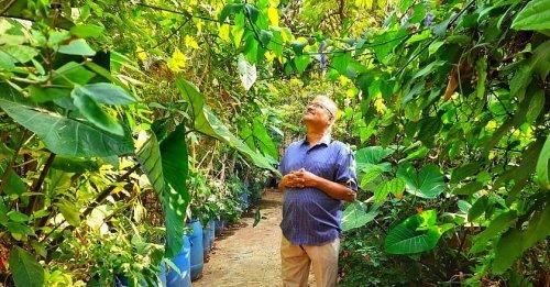 Birds, Butterflies, 1700 Trees: Bengaluru Man Grows Terrace Jungle