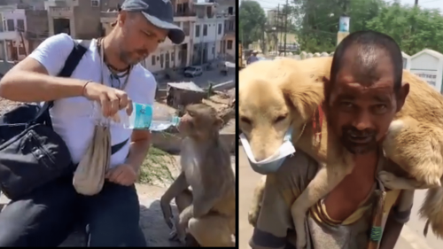 Watch: Moving Videos of Humans Helping Animals Amid the Pandemic