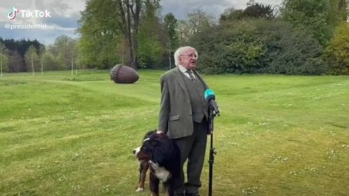 Ireland Pres. Michael Higgins gives a TV interview while his Bernese Mountain Dog puppy, Misneach, vies for attention.