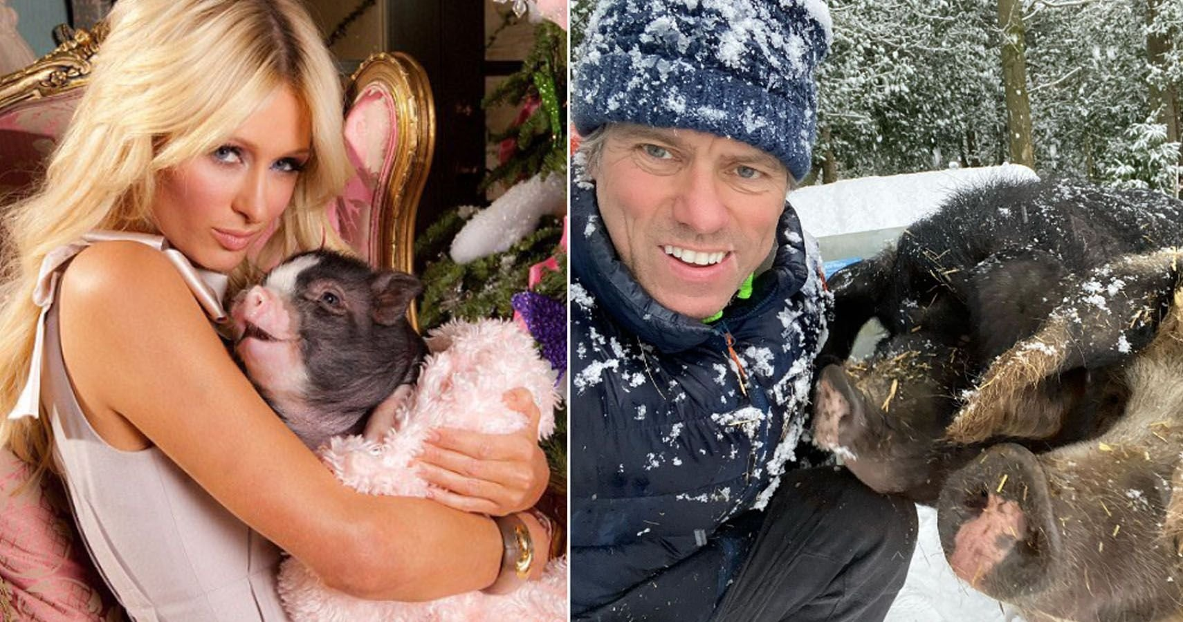 5 Celebrities who Spoil their Not-So-Mini Pet Pigs