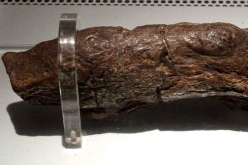 Biggest poo on record is from parasite-riddled Viking who invaded England