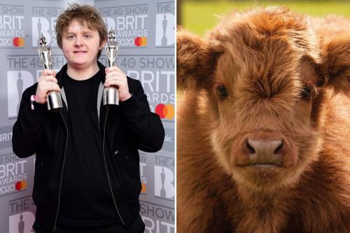 Lewis Capaldi has newborn Highland calf named after him by Fife wildlife park