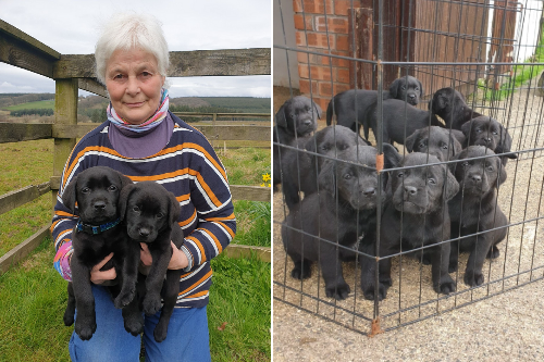 Two puppies stolen from Scots farm returned - but another two still missing