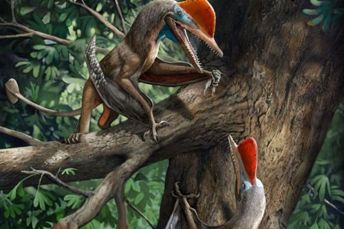 Flying 'Monkeydactyl' dinosaur 'was first creature with opposable thumbs'