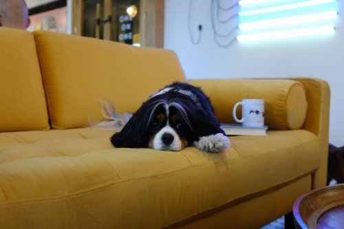 15 Useful Things to Do When You're Stuck at Home | The Simple Dollar