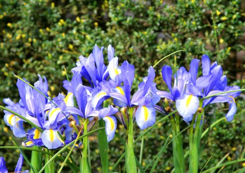 13 Plants for Your Rain Garden