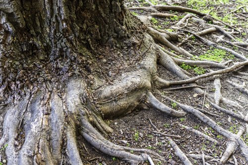 3 Common Tree Root Problems and How to Solve Them