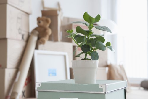 How to Pack Houseplants for a Move