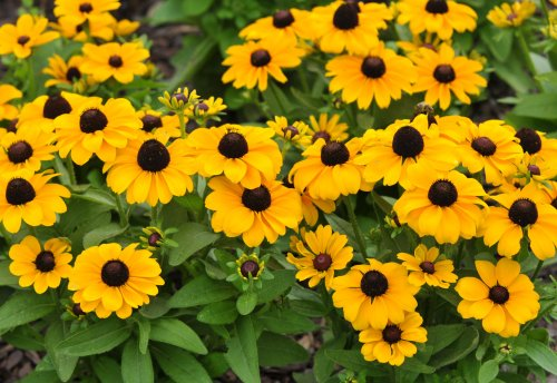 15 Colorful Perennials to Spice Up the Zone 7 Garden