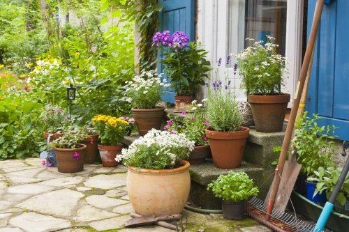 How to Get Your Houseplants Ready to Go Outdoors