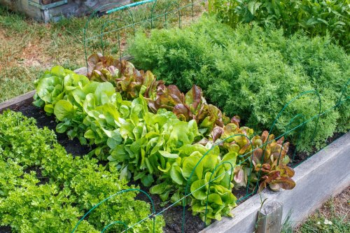 What Is French Intensive Gardening and Does It Work for You?