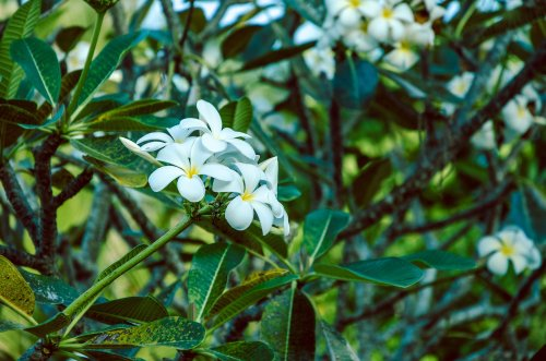 13 Popular Varieties of Gardenia You'll Want for Your Garden