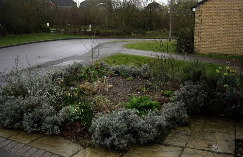 What Is a Rain Garden? A Beautiful Way to Help Protect Our Water
