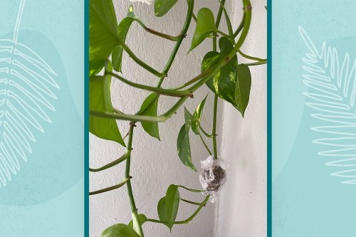 Air Layering Is the Plant Propagation Method You Need to Try