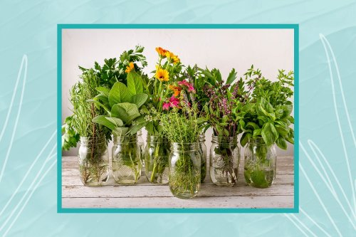Expert-Approved Tips for Growing Herbs From Seed That Will Lead to Big Harvests