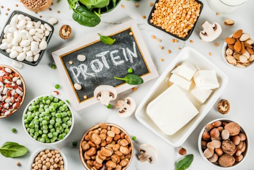 What Is Plant Protein?