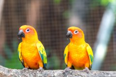 Discover bird species