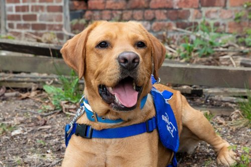 Meet Bear - the unwanted pet set to enjoy a second lease of life helping a family in Sheffield