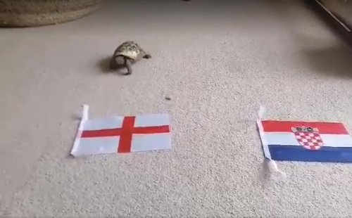 Sheffield nurse's 'mystic' tortoise predicts Euro 2020 results - here's what he thinks will happen to England