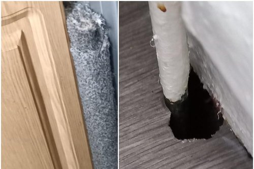 Disabled Sheffield woman risks losing home after refusing to pay rent over rat problems