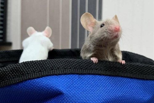 These adorable rescue pets in Sheffield are looking for their forever homes
