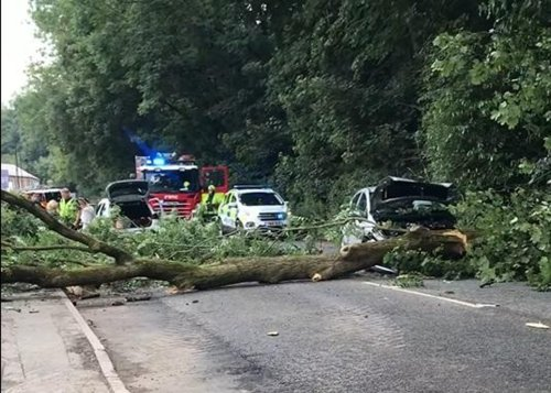 Woman's lucky escape after tree falls 'smack bang' on top of car on Sheffield road