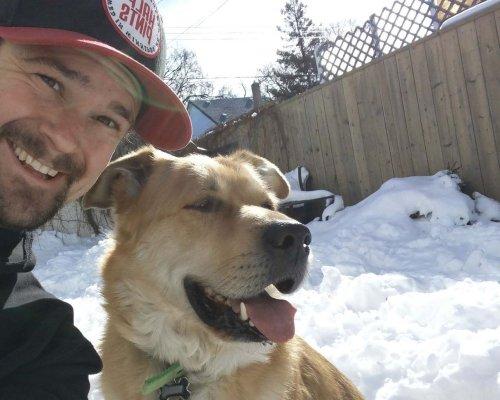 Two dogs poisoned in Minto neighbourhood