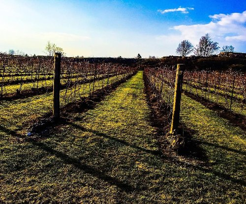 Winery in Tweed, Ontario wins two gold, one silver medal in French wine competition