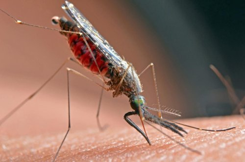 Toronto and Peel Public Health issue public warning following West Nile virus find